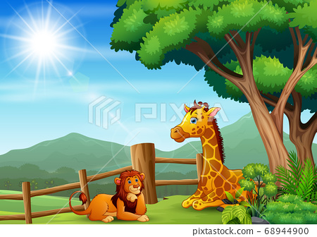 A giraffe and lion sitting and enjoying at the zoo 68944900