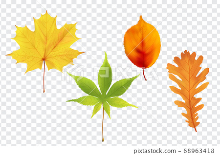 秋天的落葉,葉楓矢量集 68963418