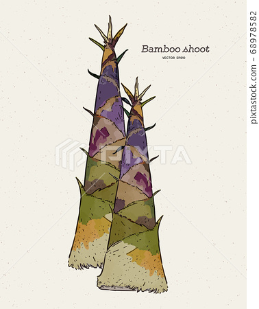 bamboo shoot, hand draw sketch vector. 68978582