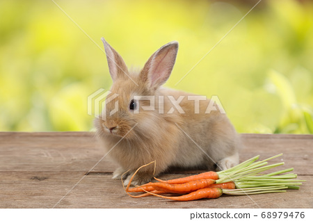 cute brown easter bunny rabbit on wood with carrots and green leave background 68979476