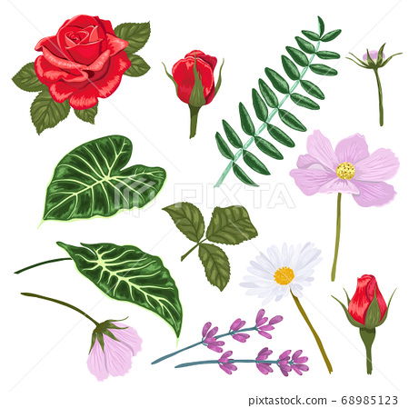 Set of flowers and leaves for making compositions. Vector illustration. 68985123