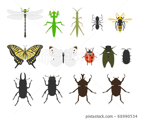 昆蟲圖設置材料/載體 68990534