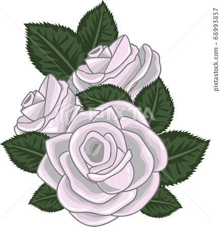 roses vector illustration on white 68993857