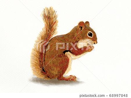松鼠的例證 68997848
