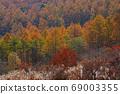 Kiyosato/Beautiful autumn leaves 69003355