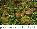 Mossy garden close-up in spring 69015430