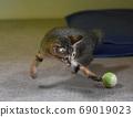 小貓瘋狂的玩具球 69019023