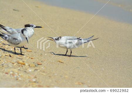 美麗的野生鳥,在熱帶的海灘 69022982