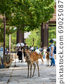 Todaiji Namdaemun and Deer 69025087