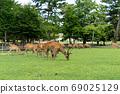 Todaiji Namdaemun and Deer 69025129