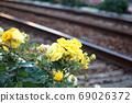 Toden荒川線(東京櫻花電車)鐵路和黃玫瑰 69026372