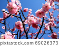 兼六園盛開的梅花和藍天 69026373