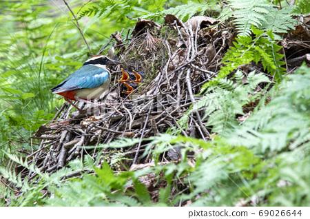 八隻鳥的育雛 69026644