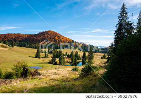mountain landscape in autumn. forest in fall foliage on top of a 69027876