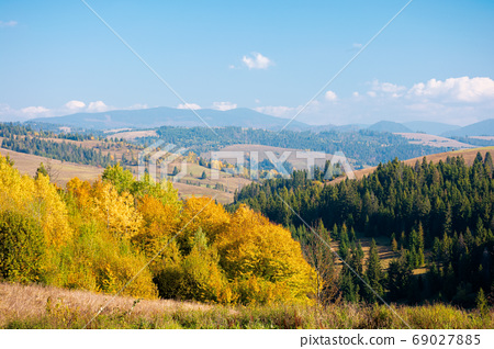 rural landscape of carpathian mountains in autumn. trees in yell 69027885