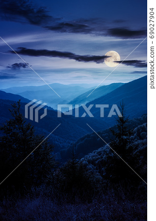 spruce forest on the hillside meadow at night. colorful grass in 69027904