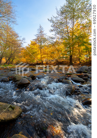 mountain river among the forest in autumn. sunny morning landsca 69027930