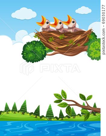 Chicks in nest on tree branch 69030177