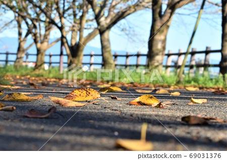 Autumn wind 69031376