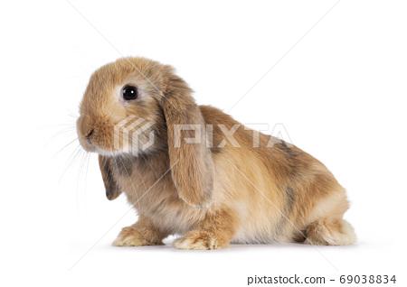 Baby bunny on white background 69038834