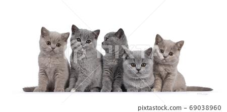 Group British Shorthair kittens on white 69038960