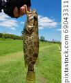 쏘가리, 민물고기 69043311