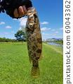 쏘가리, 민물고기 69043362