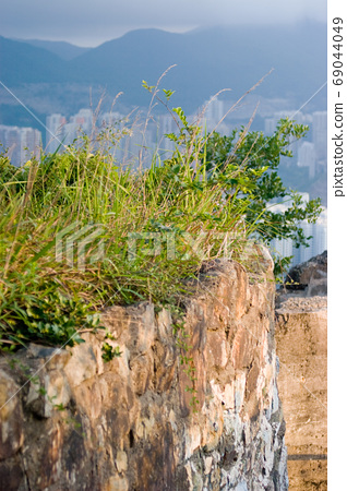 Green Plant Wall , Dry Grass Plants and Brick Wall 69044049