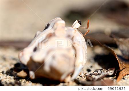 居住在Am美大島沙灘上的寄居蟹成員 69051925