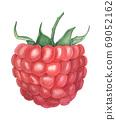 Vintage watercolor raspberry botanical illustration 69052162