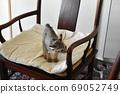 野餐桌上的椅子上騎著野雞的小貓 69052749
