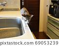 Sabatra小貓在廚房裡巡邏 69053239