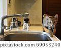 小貓在廚房巡邏 69053240