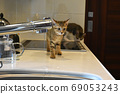 小貓在廚房巡邏 69053243