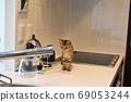 沙巴特拉小貓對從水龍頭出來的水感興趣 69053244
