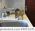 兩個月大的小貓對廚房感興趣 69053245