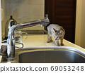 野雞小貓對自來水感興趣 69053248