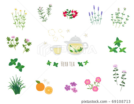 Illustration of fresh herbal tea and herbs 69108713