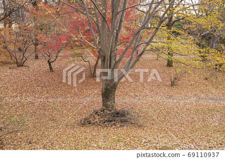 단풍의 숲의 낙엽의 융단 69110937