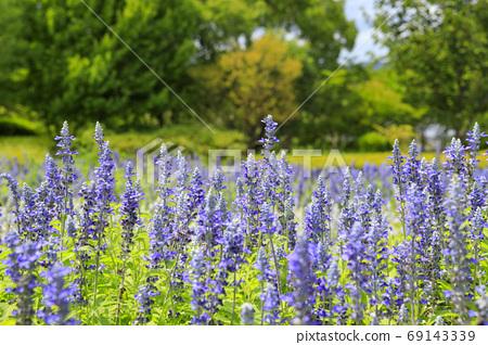 마미 구릉 공원 여름 꽃 69143339