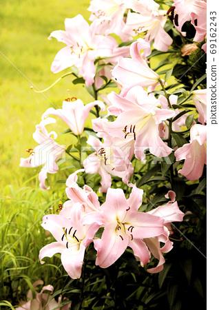 꽃 69162243