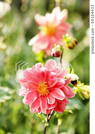 꽃 69164433