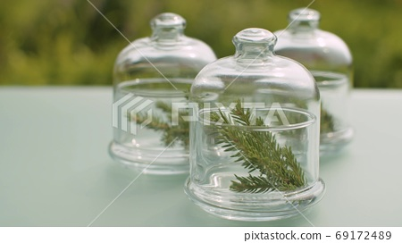 Fir tree branches in glass jars 69172489