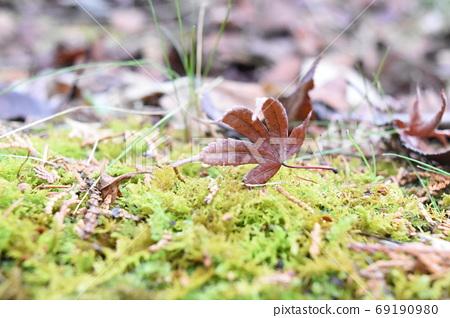 落在苔藓上的死枫 69190980