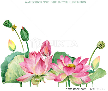 lotus watercolor botanical illustration. 69198259