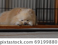 Uta Sleeping Dog 69199880