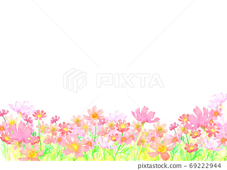 Illustration of cosmos field painted by watercolor 69222944