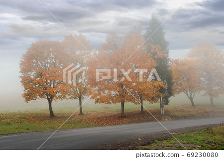 trees in the fog on the road side. misty autumnal weather. overc 69230080