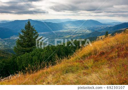 spruce forest on the hillside meadow. beautiful mountain landsca 69230107