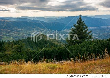spruce forest on the hillside meadow. beautiful mountain landsca 69230108